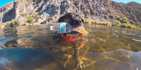 Chipper the Dog, On a Mission to Help Save Planet Earth